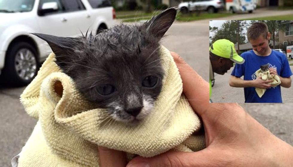 Nine Strangers Got Together to Save a Kitten Stuck in Storm Drain
