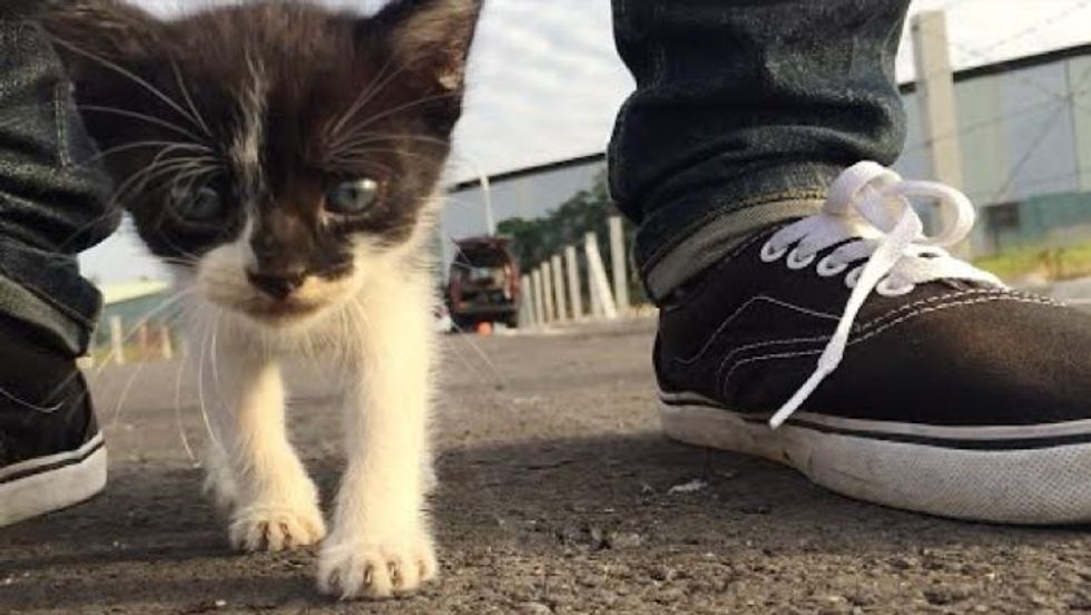 Tiny Stray Kitten Following His Human Friend Around Like a Duckling