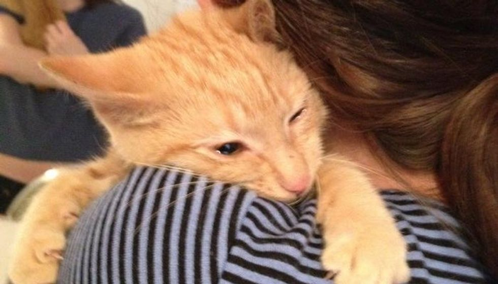 Woman Saves Kitten Despite Being Told He was too 'Feral', Right After Adoption...