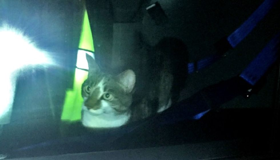 Missing Cat's Purrfect Homecoming in a Police Squad Car