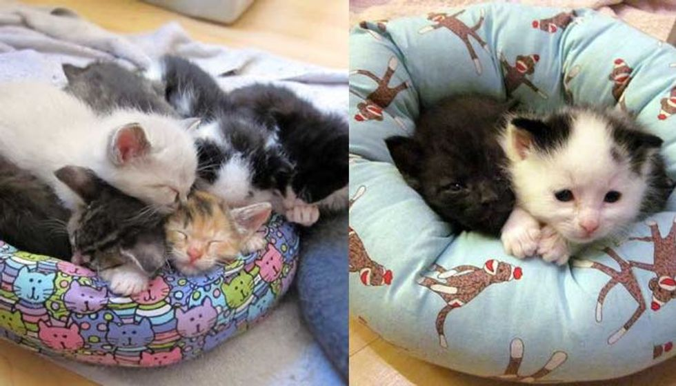 Teeny Foster Kittens Receive Mini Sized Beds (9 Photos)