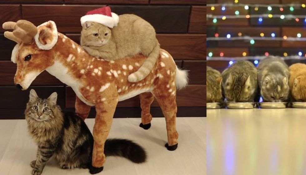 House of 10 Cats Have Meowy Christmas, Even Ride Reindeer