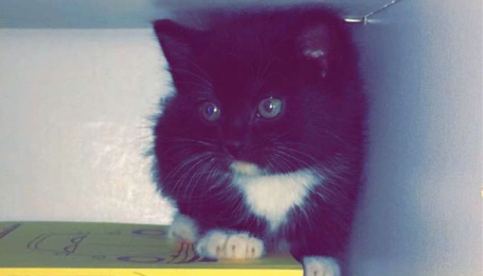 Kitten Found in Woods, Rescued in Time for His First Christmas