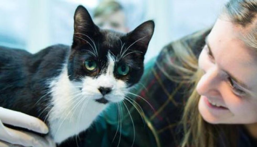 After Seven Years, Missing Cat Came Back on Christmas!
