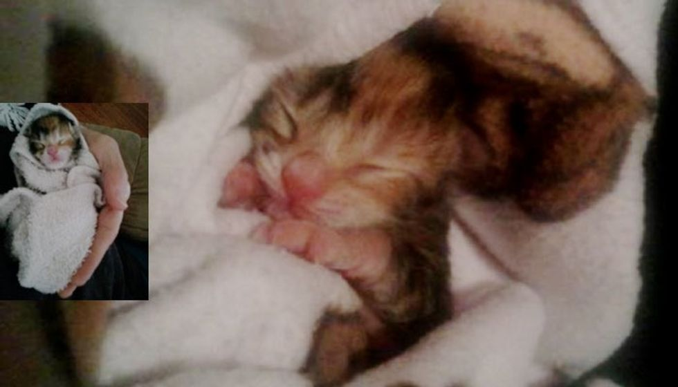 Kitten Found on Side of Road Hours After Birth, Now Thriving!