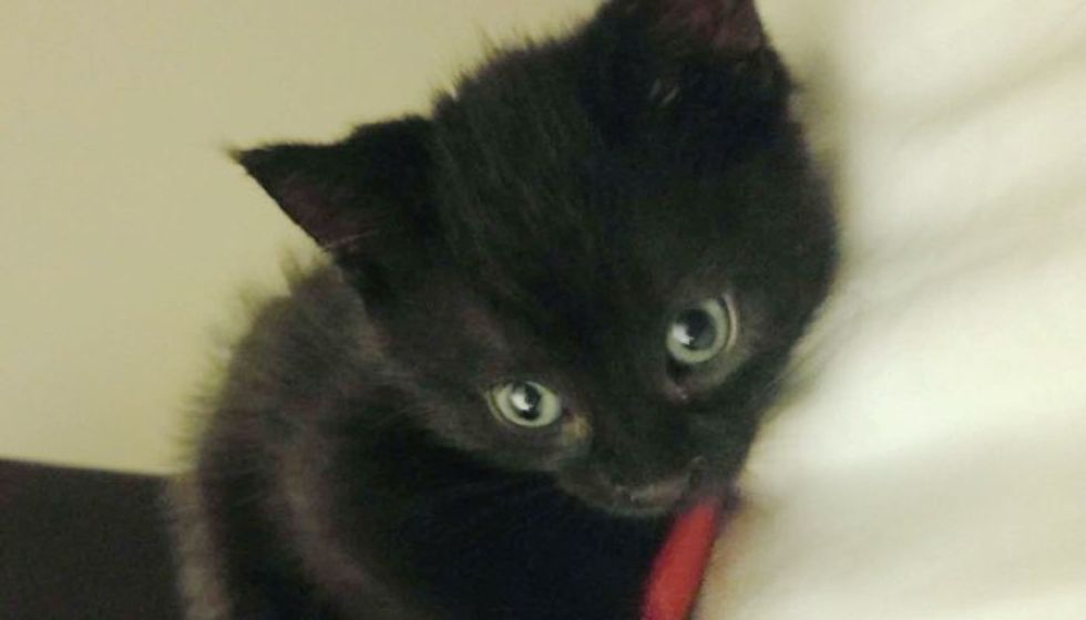 Tiny Kitten Comes to Man During Time of Need and Changes His Life