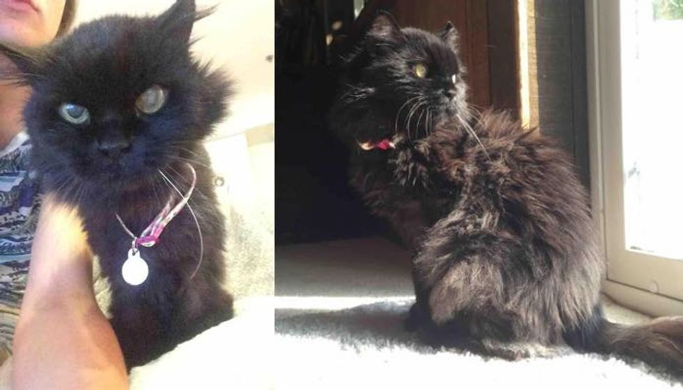 Woman Saves Senior Cat Who Couldn't Find a Home and Helps Get Her Fluff and Life Back!
