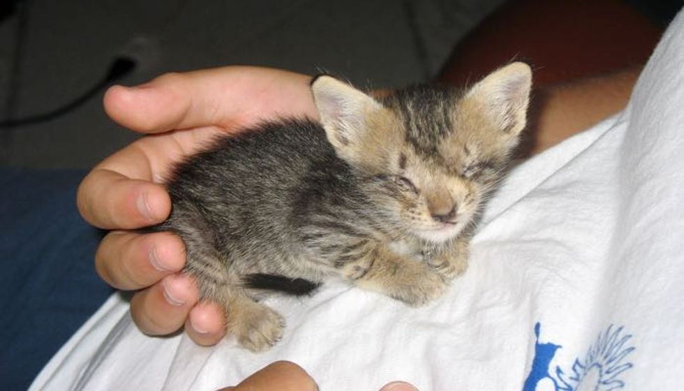 Blind Kitten Saved by Man Who Never Gave Up on Her, Then and Now!