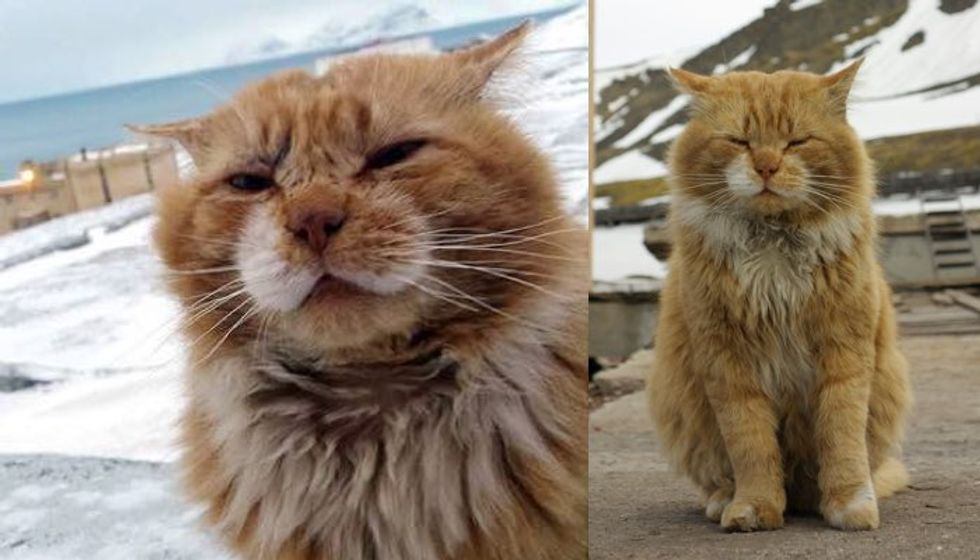 Ginger Cat Registered as Arctic Fox on Paper from Svalbard Archipelago...