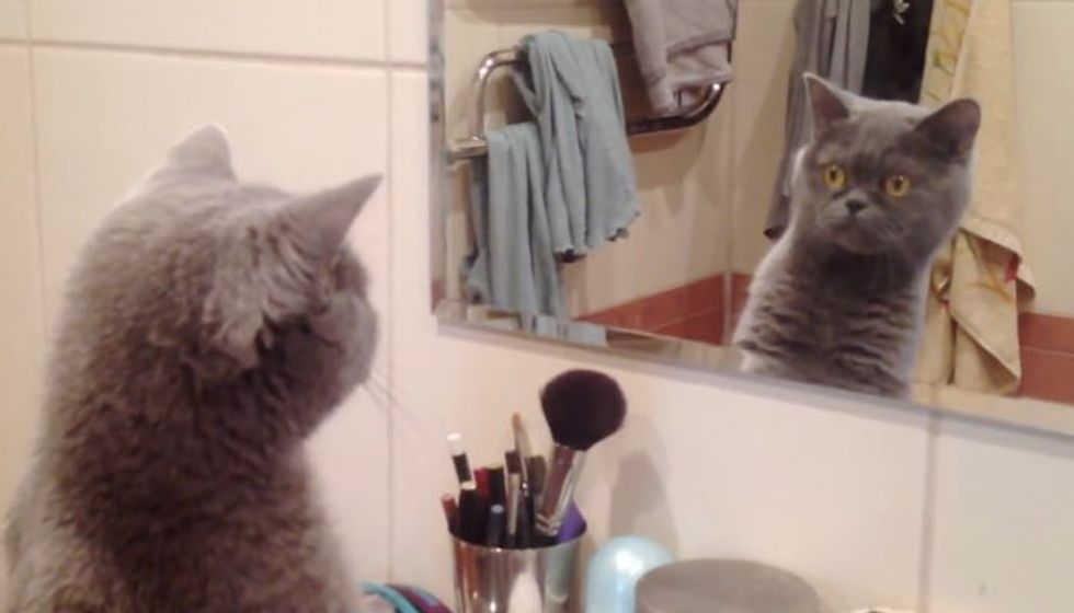 Cat Admires Himself When He Discovers His Reflection!