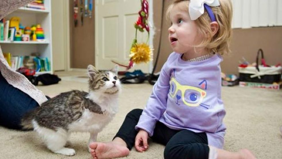 3-legged Kitten Adopted by 2-year-old Amputee Share a Special Connection