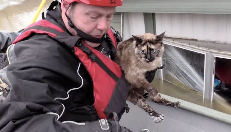 Cat Survived Flooding by Floating in Her Litter Box, Saved by Rescuers!