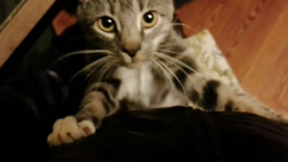 Cat Keeps Hugging Her Human to Make Him Stay When He Leaves for Work