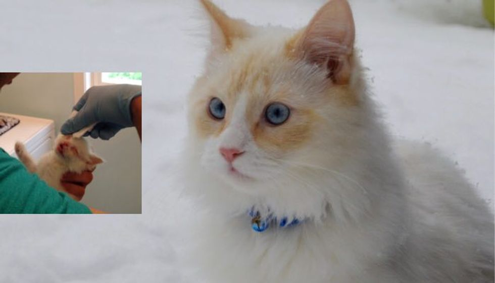 Scrawny Kitten Found in Bush Has Fluffed Up and Loving His First Snow