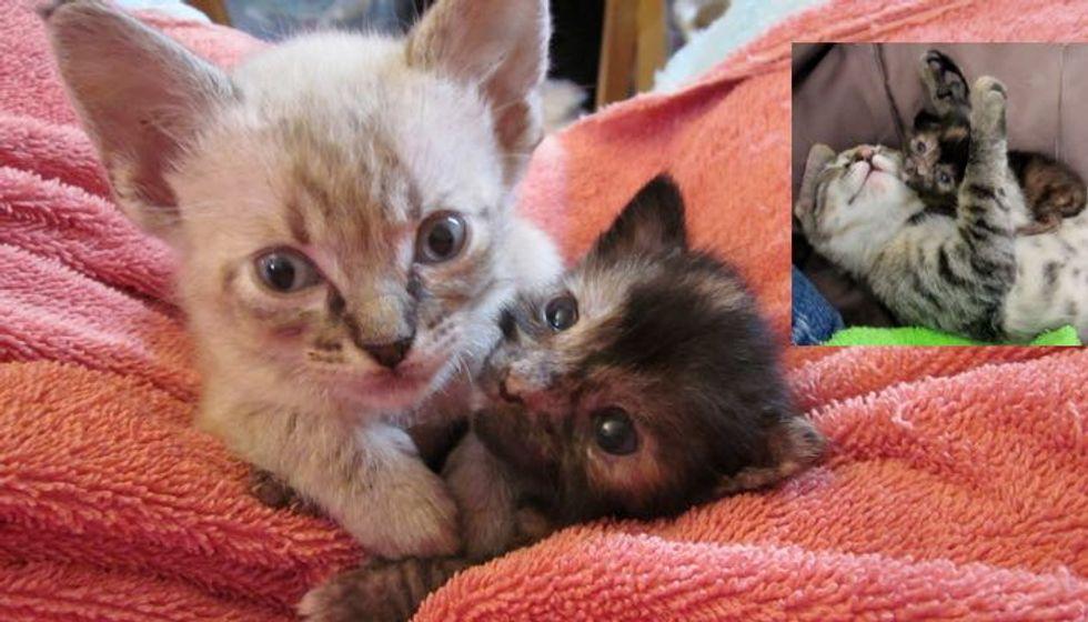 Tiny Foster Kitties Help Tinier Orphaned Kitten Live