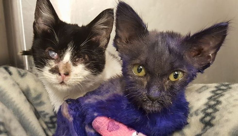 Purple Kitten Rescued from Life as Chew Toy, Now Cuddles with New Friend So Much It Helps Him Heal