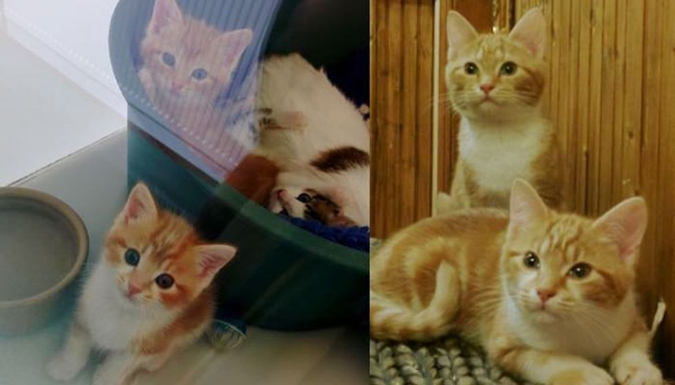 Ginger Sisters Now Can Stretch Their Legs and Live Outside Shelter Cage