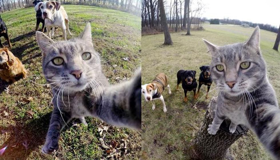 Manny the Cat Takes Selfies for Him and His Dogs with a GoPro Camera
