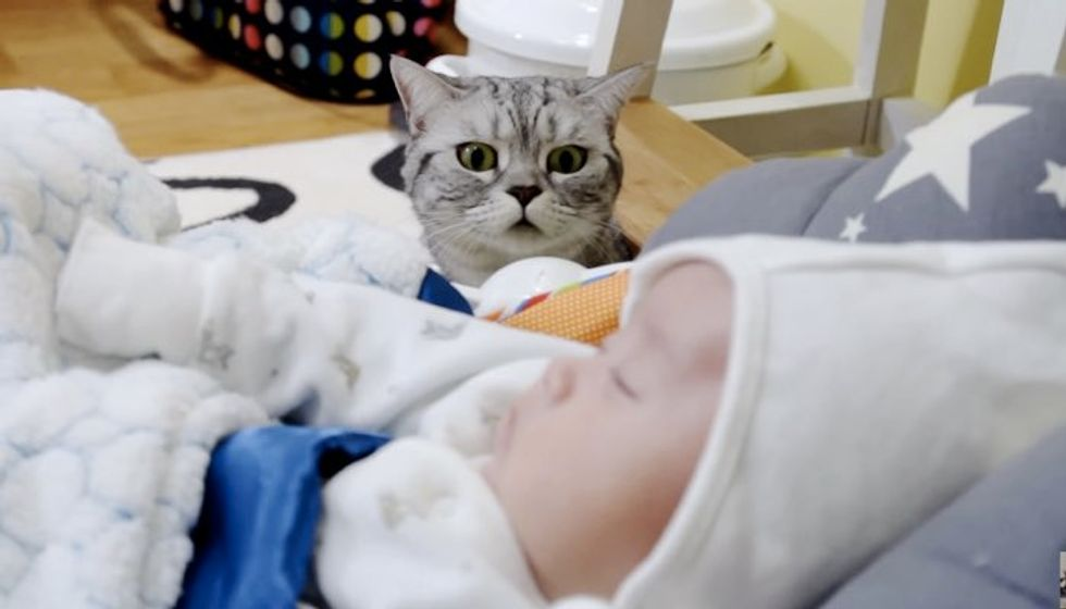 Five Scottish Fold Cats Meet Their Little Baby Brother