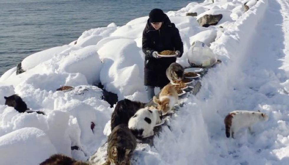 Woman Helps Feed Hundreds of Feral Cats Despite Heavy Snow