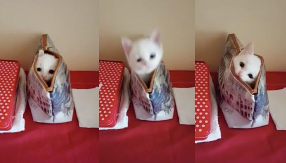 Tiny Kitty Plays Super Fast Peekaboo from His Mom's Bag
