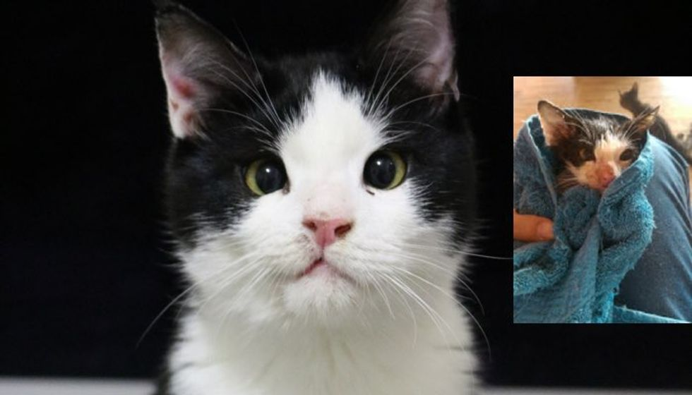 Kitten Saved from Near Death, Now Wears a Permanent Smile!