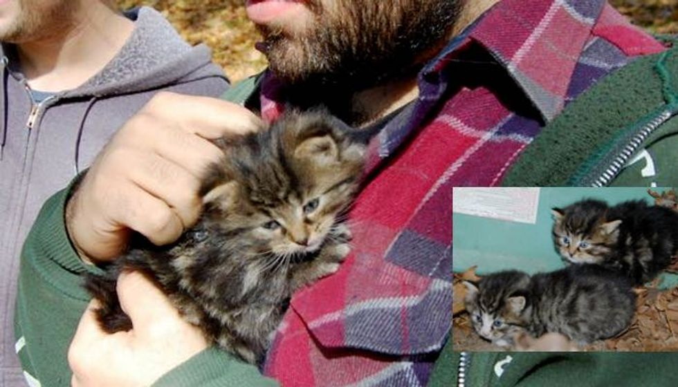 Orphaned Kittens Hiding Under a Boat Saved by Dog and Campers
