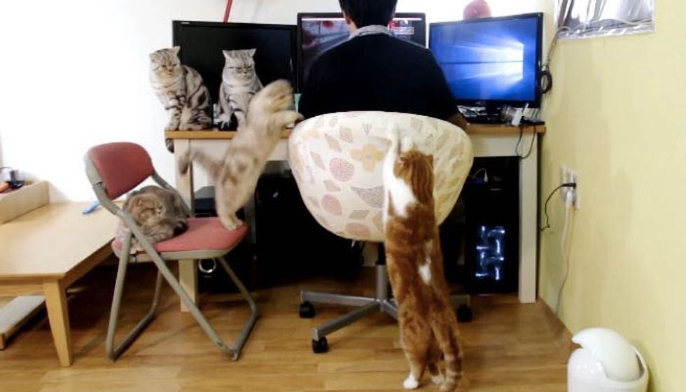 Five Cats Work Together to Remind Their Human of Mealtime