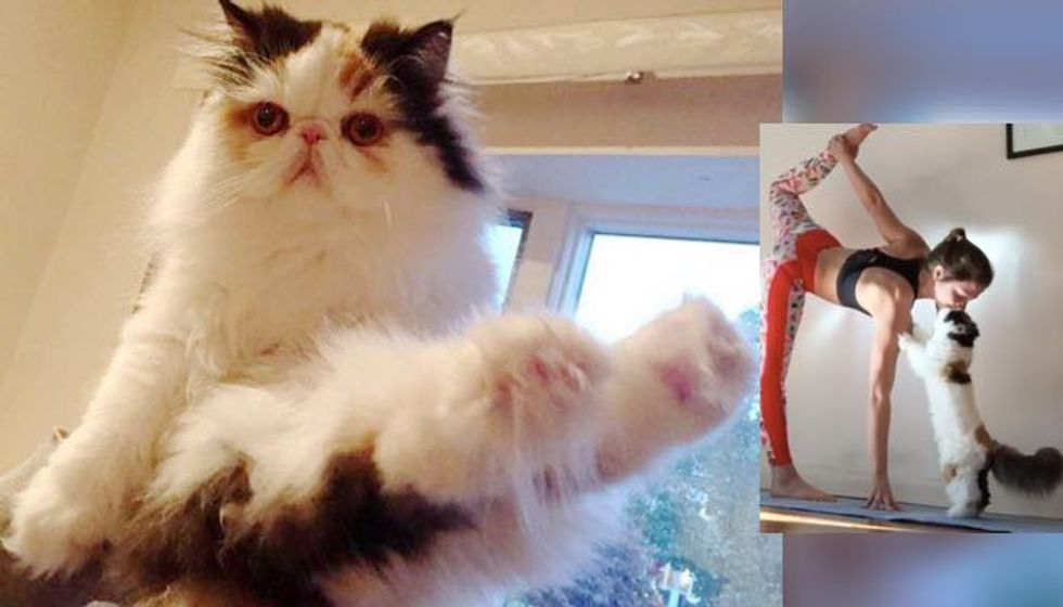 Cat Stands Up on Two Paws to Give Human a Kiss as Her Fluffiest Coach!