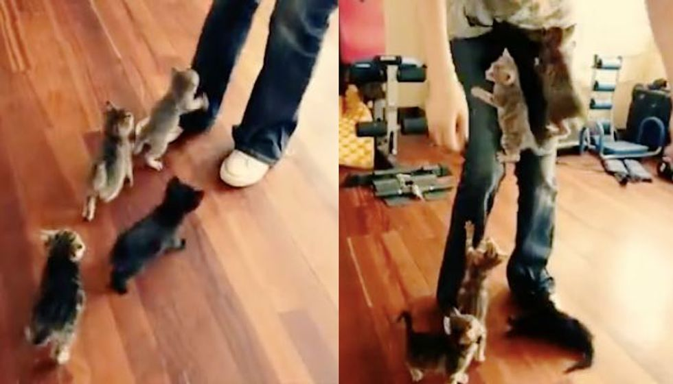 Six Tiny Kittens Won't Let Their Human Go. Cutest Stampede Ever!