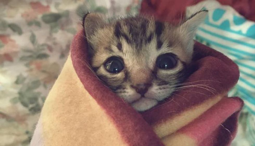 Rescue Kitten Found Abandoned Now Loved and Warm as a Purrito!