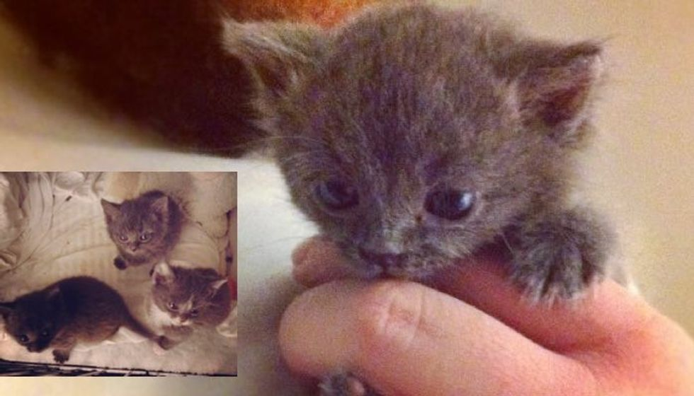 3 Abandoned Kittens Given a Second Chance, Now They Can't Stop the Love!