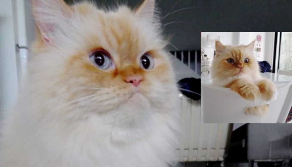 Fluffy Himalayan Cat was Sick and Isolated in Shelter But His Forever Home Healed Him!