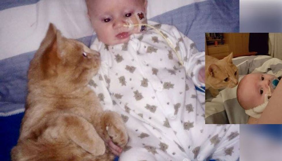 Cat Stayed by His Baby Brother and Helped his Broken Heart Heal