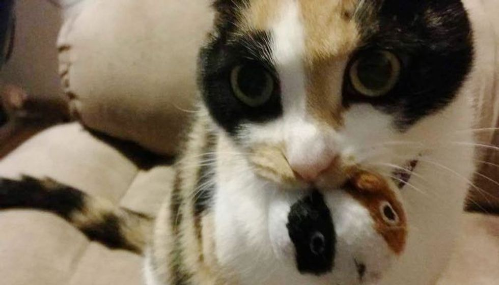 Calico Cat Won't Go Anywhere Without Her 'Baby'
