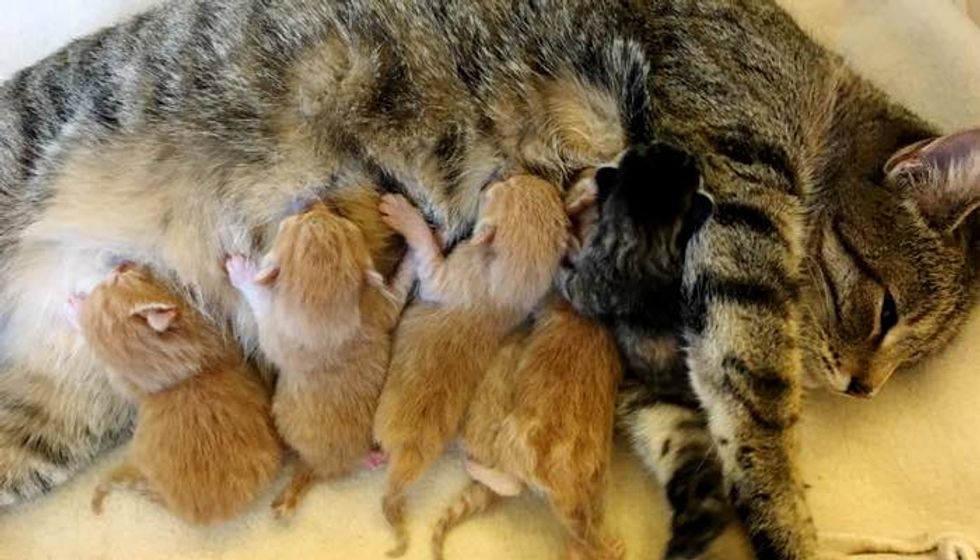 Tabby Cat Saved from Harsh Cold Surprises Rescuers with 5 Ginger Boys and One Torbie Girl