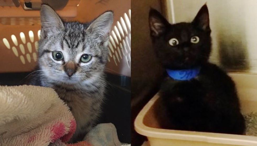 10+ Kitties Born with Cute Googly Eyes. Who Can Possibly Resist!