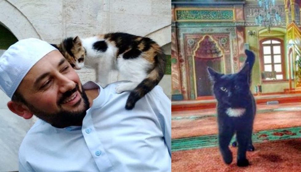 Man Opens Mosque's Doors for Stray Cats to Give Them Shelter and Keep Them Warm
