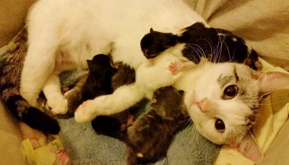 Stray Cat Asks Family to Help Bring Her Babies Safely into the World... (with Updates)
