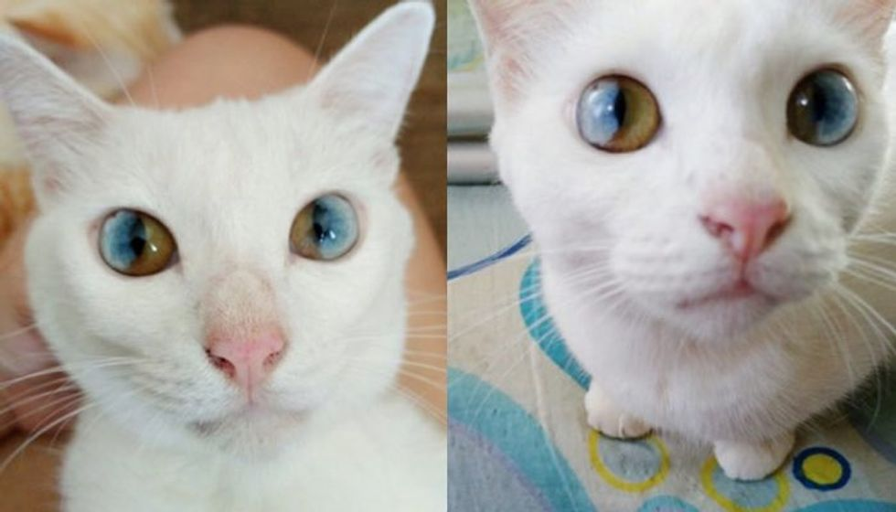 This Cat Has the Most Beautiful and Magical Eyes!