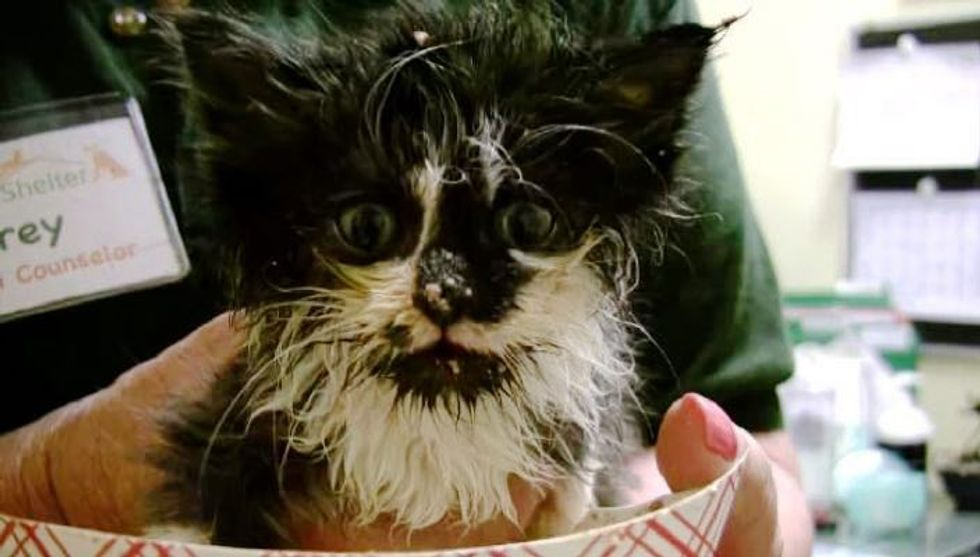 Rescue Kitty Learns to Eat on Her Own, It's a Purrfect Mess!