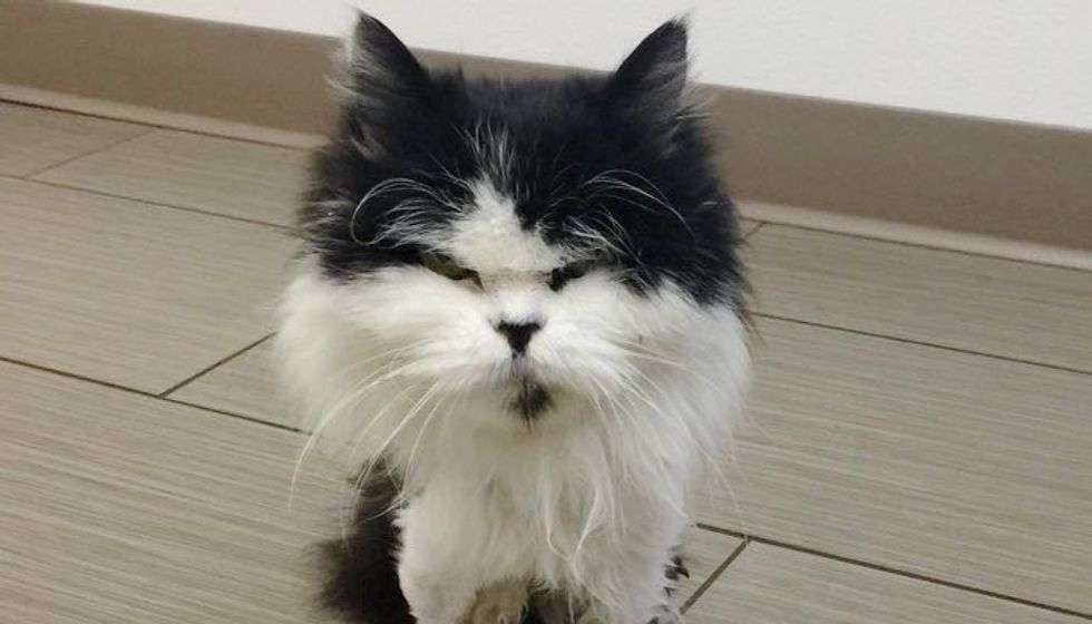 13 Year Old Stray Cat Less than 4 Pounds Surprises Everyone with Her Strong Will to Live