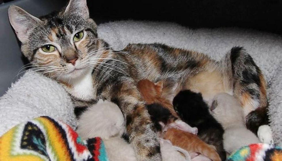 Stray Cat Mama Found Help to Safe Place Right Before She Gave Birth to Her 6 Babies