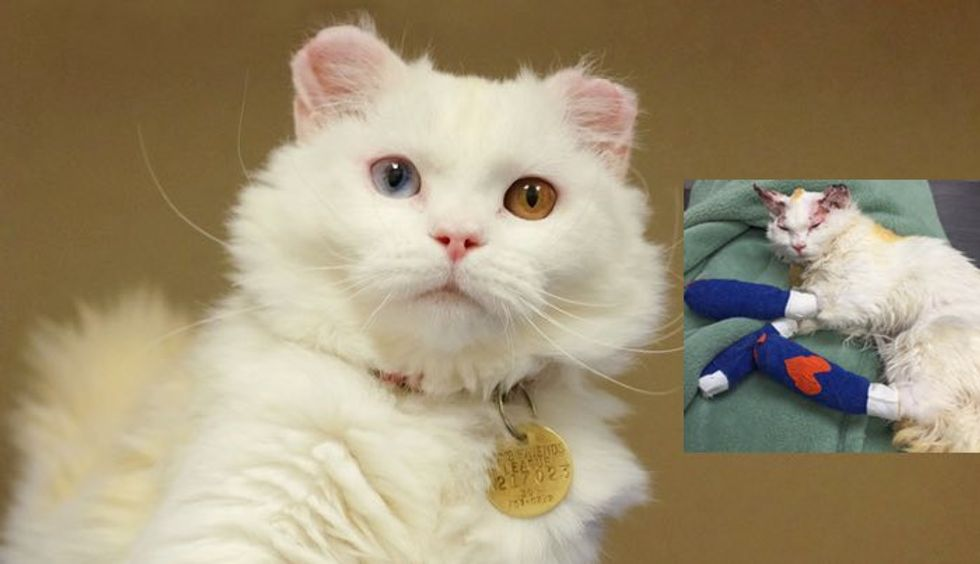 Cat who Suffered Burns Finds Love and Home with Burn Survivor
