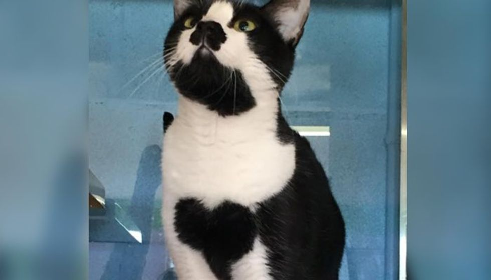 Cat with Heart on Her Chest Spent Her Whole Life in Shelter Until Now..