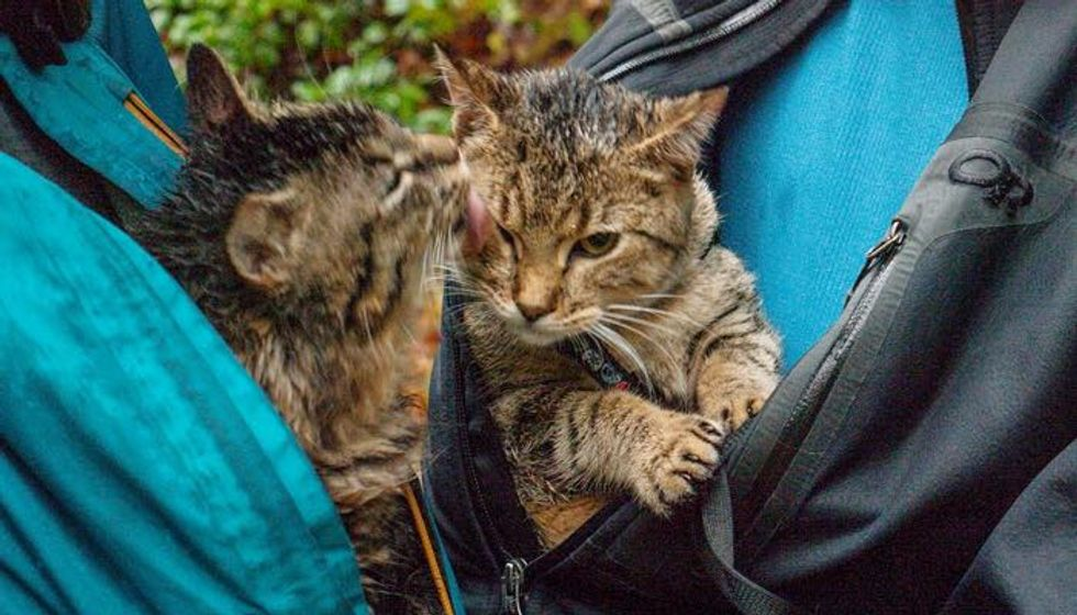 Tabby Brothers Saved from Garbage Bin Now Following Their Rescuers Everywhere They Travel