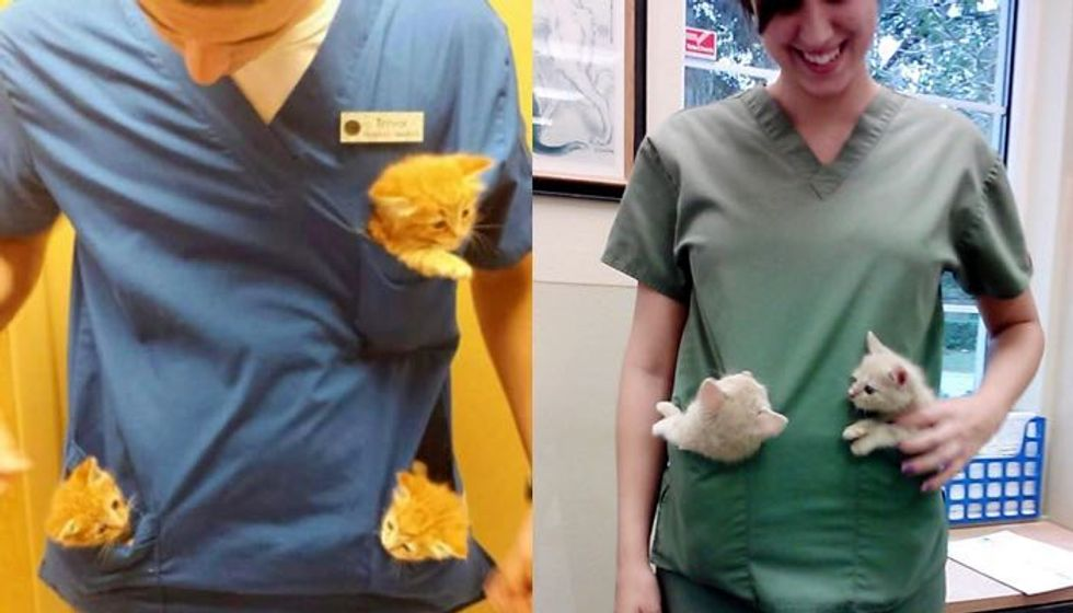 Best Perks of Working at an Animal Hospital (10+ Kittens)