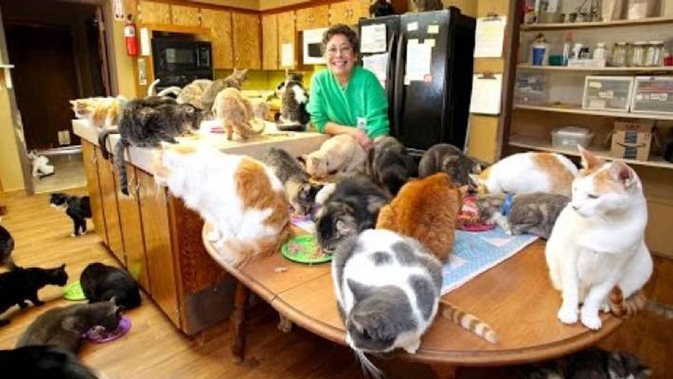 Cat Lady Lives with 1100 Rescue Kitties for a Good Cause!