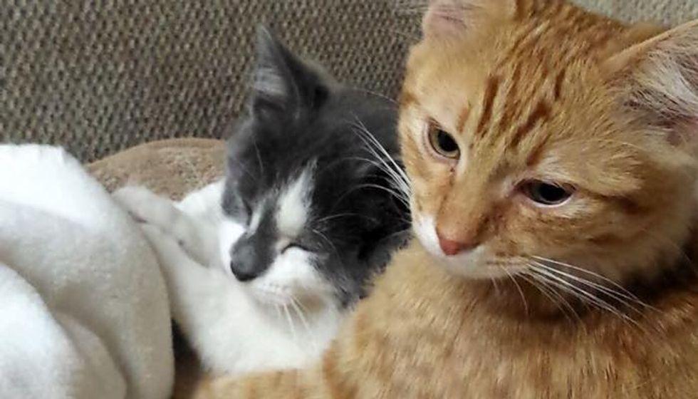 Homeless Kitten Surprises Family When He Follows Their Cat Home