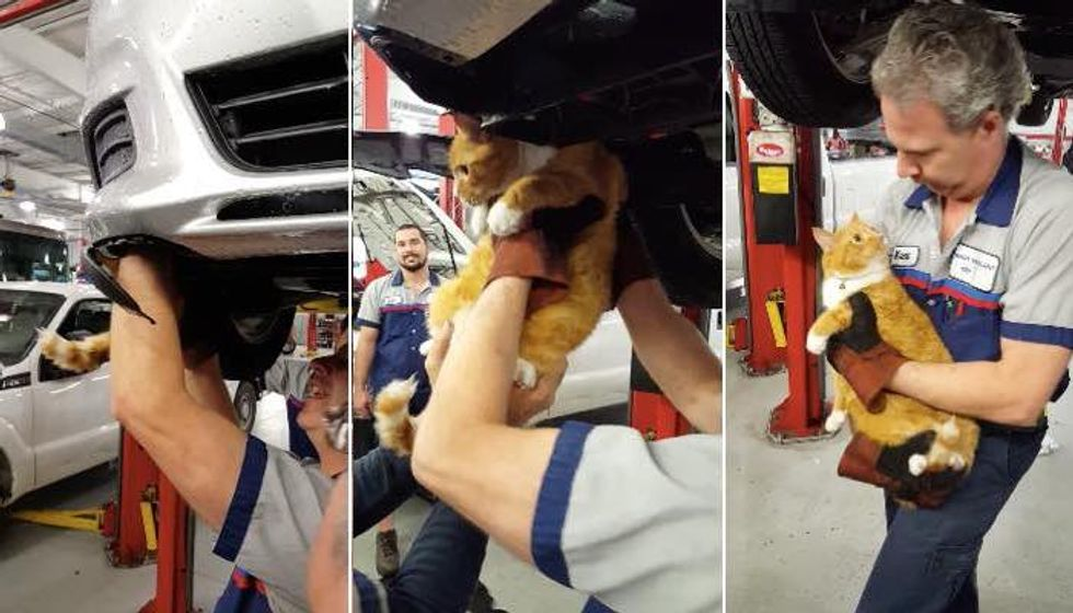 Mechanic Heard a Meow from a Car, Couldn't Believe What They Found..